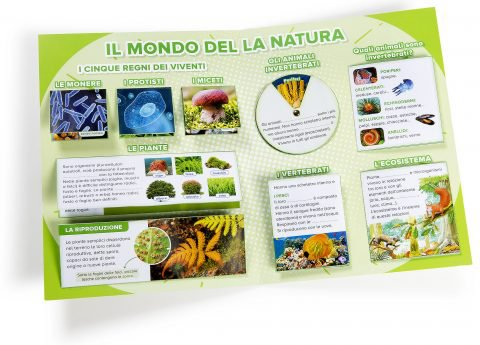 lapbook-scienze-cl4__7911-480x345.jpg